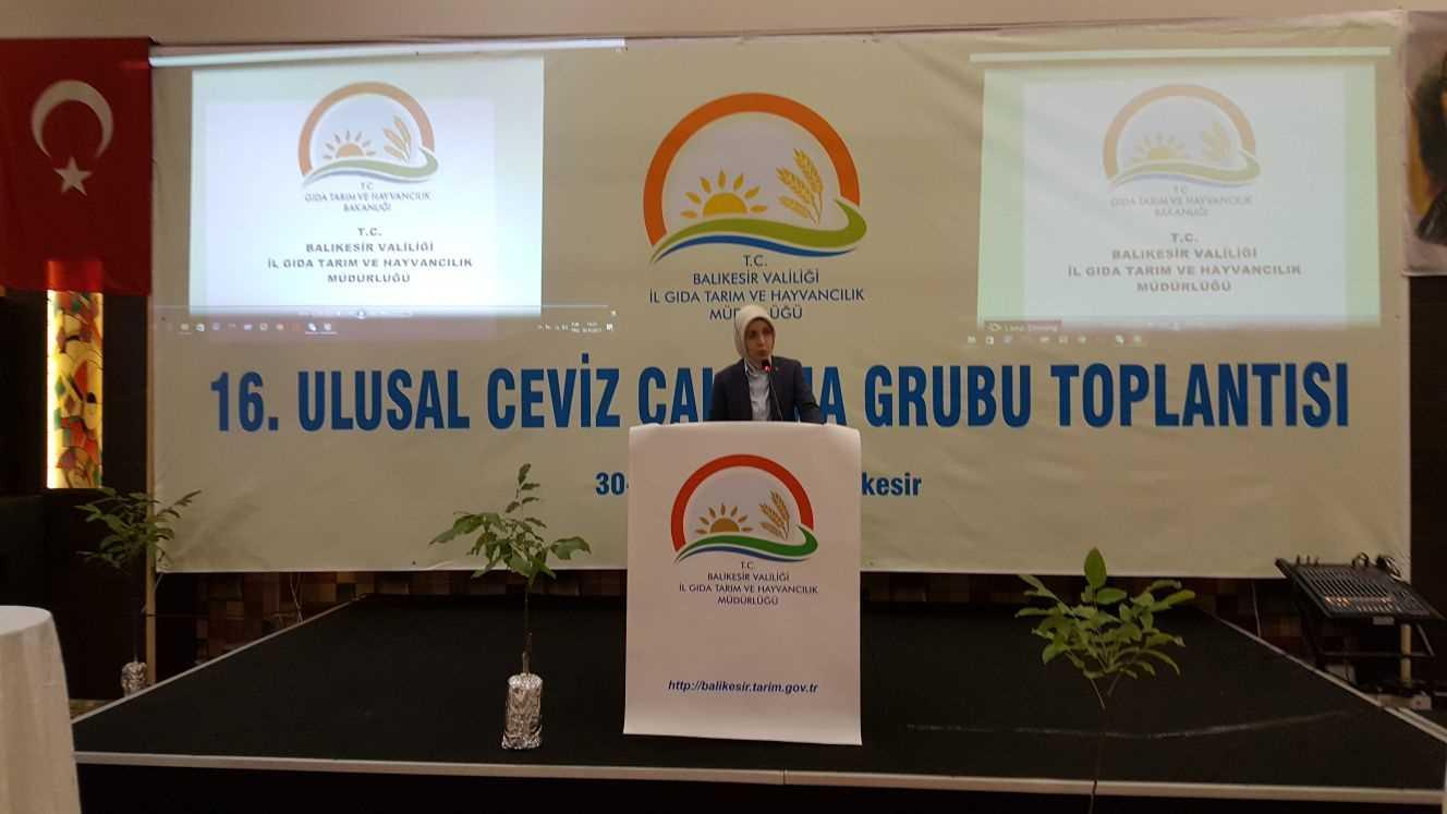 Ceviz Çalışma Grubu Toplantısıs - Sema Kırcı